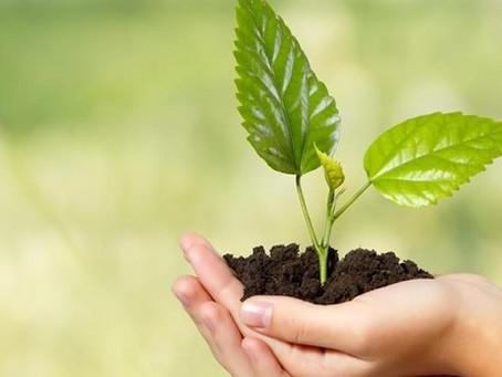 Meio ambiente e profissões promissoras