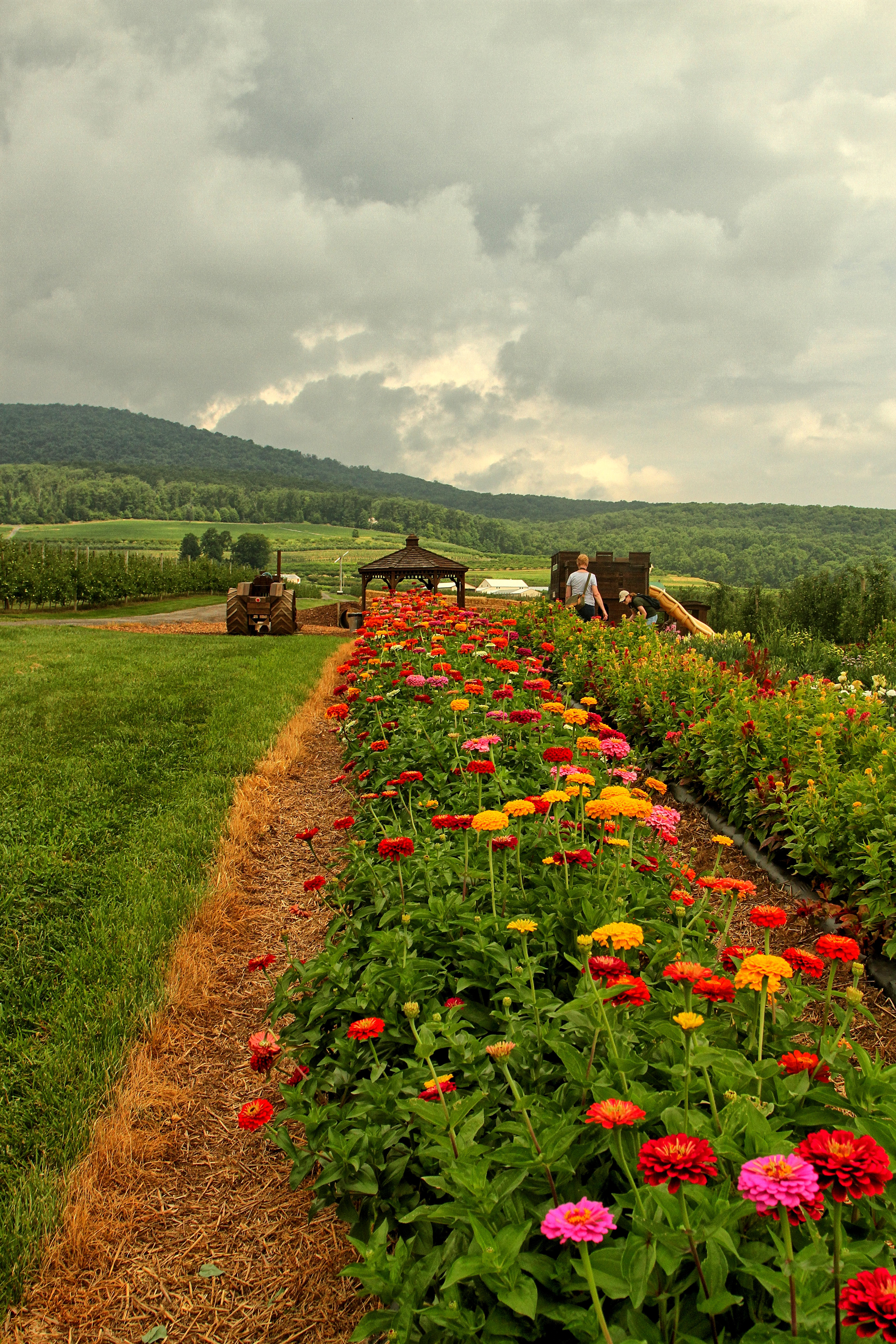 Catoctin Mountian Orchard