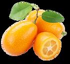 kumquat_edited.png