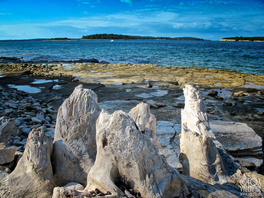 Petrified sea