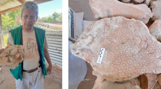 Científicos descubren en el oriente boliviano fósiles de perezosos gigantes