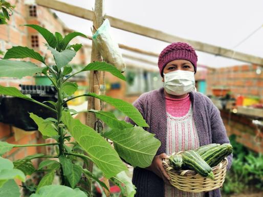 Frente al COVID-19, los agricultores urbanos bolivianos se replantean cómo trabajar