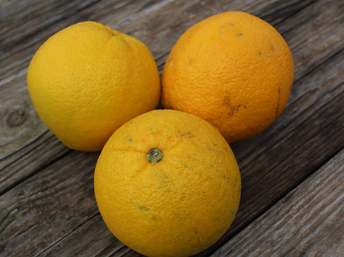 Oranges, Bag of 3