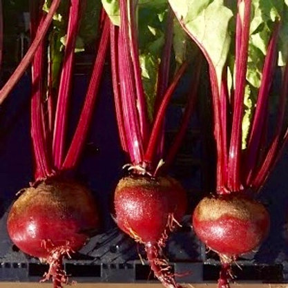 Beets, Red, Bunch, TX