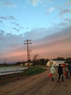 Farmshare Farmers walking