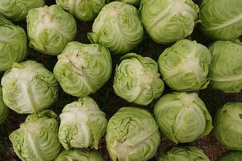 Cabbage, Green, 2lb, TX