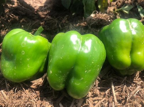 Bell Peppers, Green, 1lb bag
