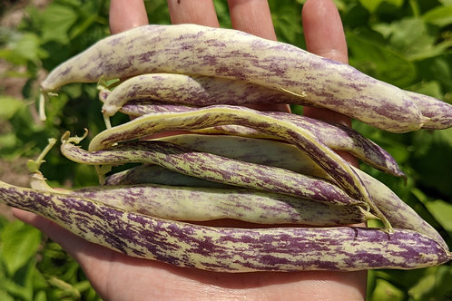 Beans, Dragon Tongue, 1/2lb