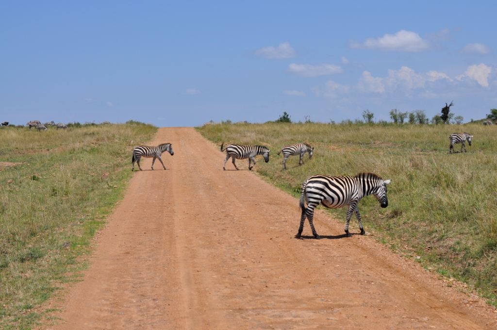 zebra-crossing-in-hells-gate