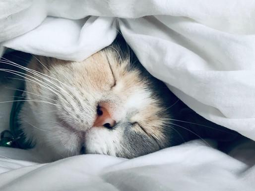Schlaf, das unterschätzte Lebenselexier