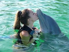 dolphin-955749_1920.jpg