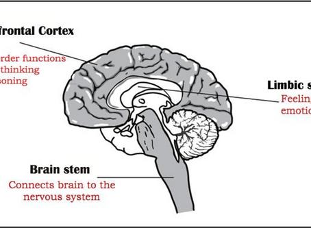 Modern Brain // Ancient Brain (Part 1)