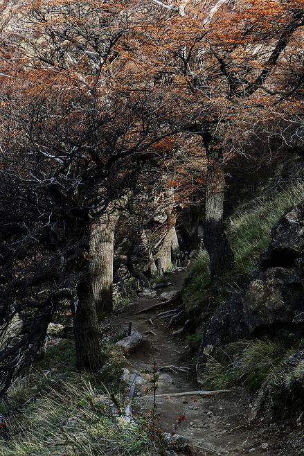 Parque_Nacional_Los_Glaciares,_El_ChaltÃ