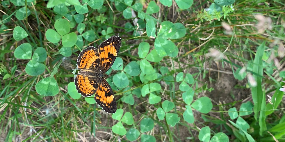 Butterfly Count at White House Farm