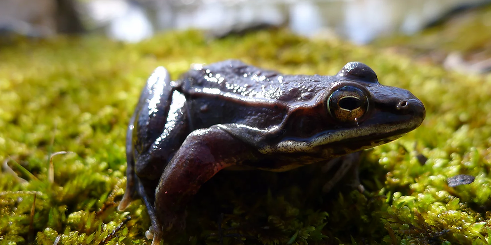 Amphibians of Spring Hike