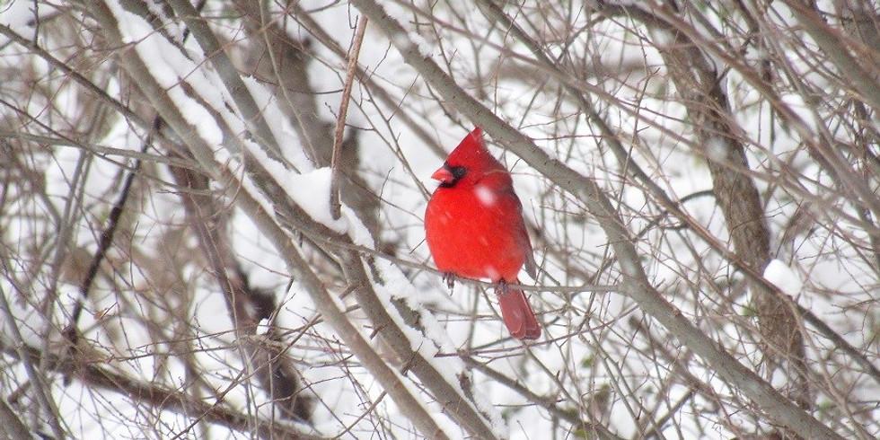 Naturalist Walk - Winter Birds