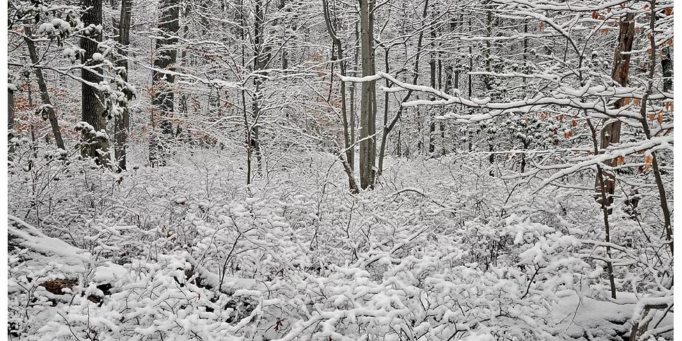Winter Survival Hike