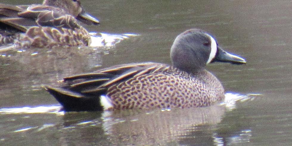 Naturalist Walk - Winter Waterfowl