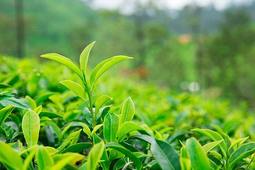 Jasmine Green Tea Leaves
