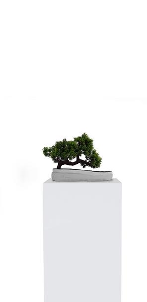bonsai dark.png