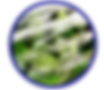 excelair flyer icon 2.png
