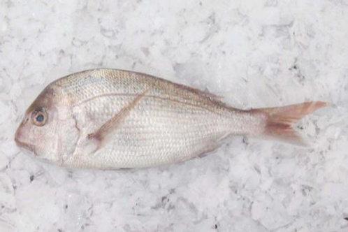 Medium Snapper 1kg Per Fish