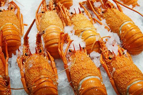 Western Rock Lobster / EACH