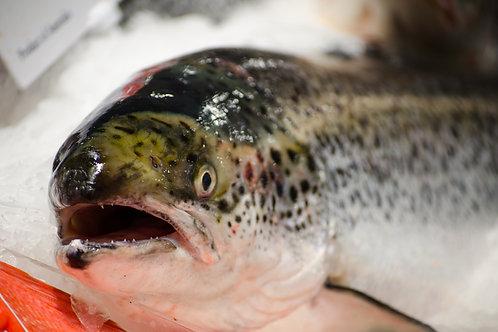 Tasmanian Salmon 3.5kg Per Fish
