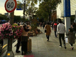 Apgujeong-ro street garden design