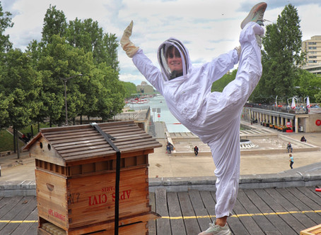 Soutenir les abeilles // Biodiversité