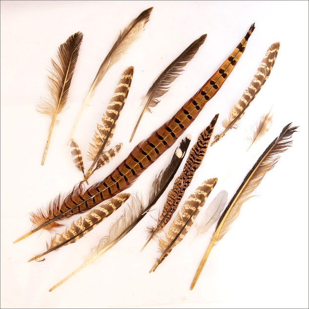 By Sue Daly - Feather finds