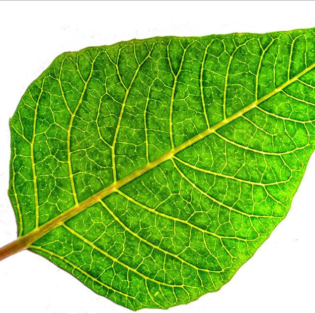 By Sue Daly - Wabi Sabi Leaf