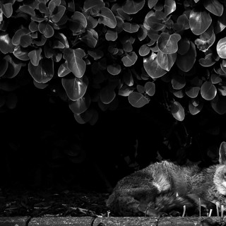 By Ann Young - Fox next door