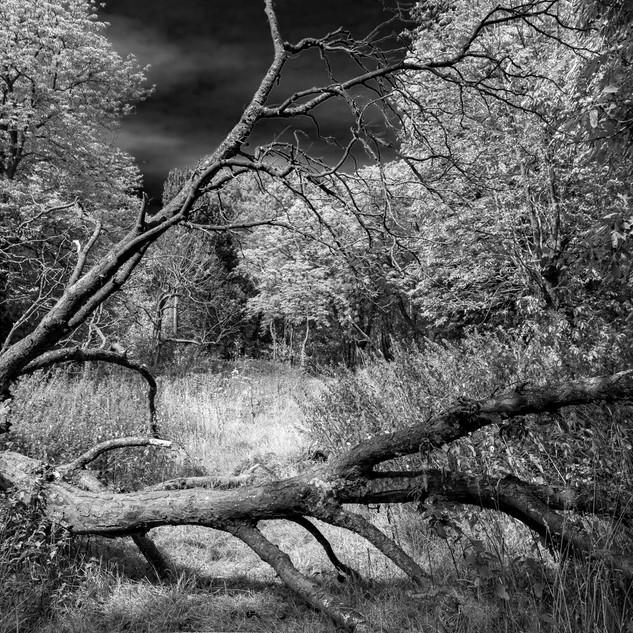 By Neil Robertson