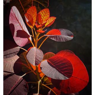 By Varsha Chilka