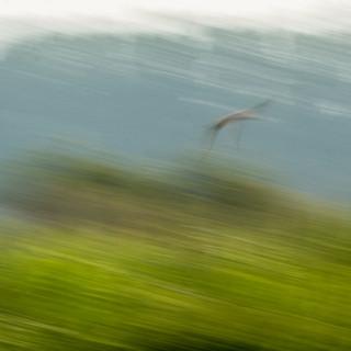 By Steve Hanley - Wildfowl & Wetlands Arundel