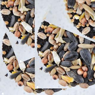 By Ian Jeffs - loads of seeds