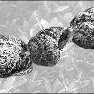 By Jan Arnold - Three Shells