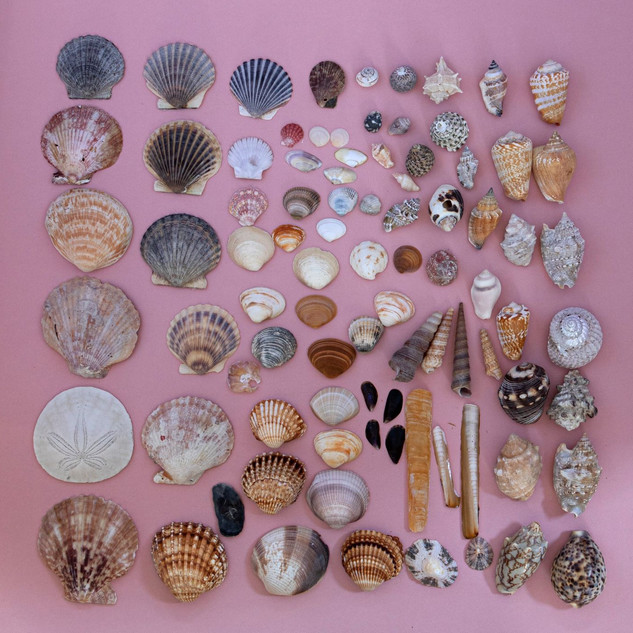 By Sue Daly - Shell finds
