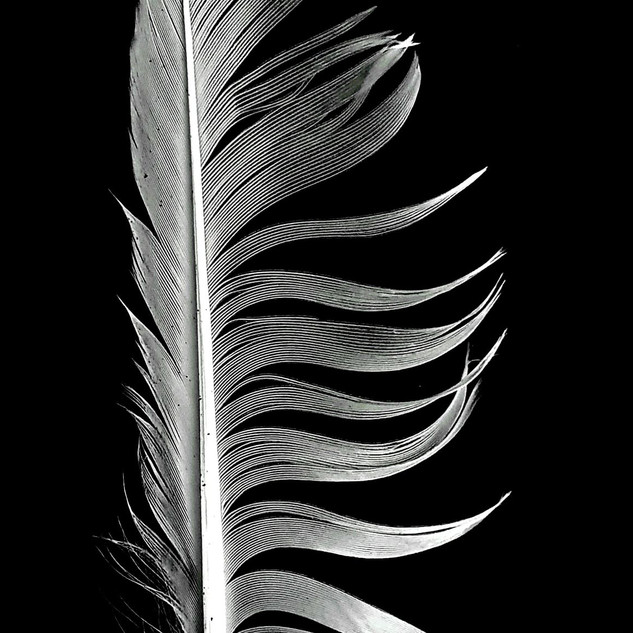 By Ann Young - Feather