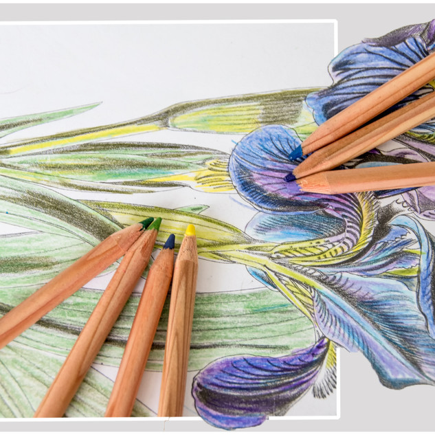 By Jan Arnold - Colouring Tranquillity