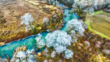 Frozen nature.jpeg