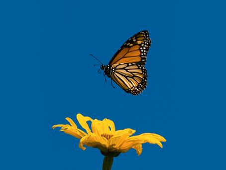 Enfim borboletas!