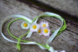 daisy-3392654_1920.jpg