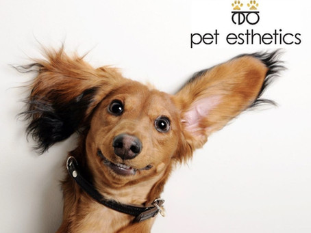 The Importance of Cleaning Your Pet's Ears!