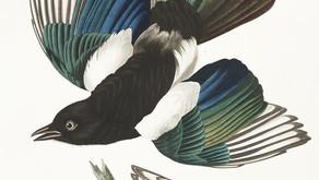 A menina dos pássaros