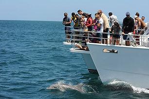 dolphin cruises.jpg