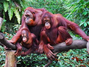 Palm Oil Freedom