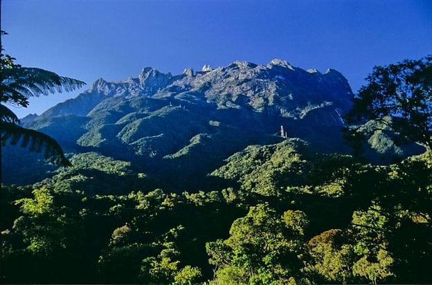 mount-kinabalu-forest.jpg