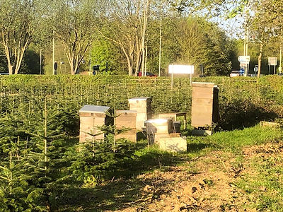 Sustainably grown Christmas Trees at Berkhamsted with bee hives